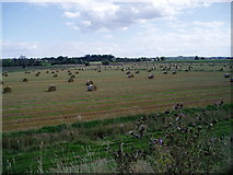 TL4279 : Harvested fields at Sutton Gault, Cambridgeshire by ethics girl