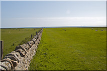NU1341 : Boundary Stone Field Wall on Bible Law Holy Island by Peter Skynner
