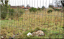 J3774 : Kincora Avenue site, Belfast (4) by Albert Bridge