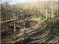 TQ0542 : Greensand Way in Great Copse by Colin Smith