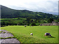 NY4103 : Sheep Grazing, Troutbeck, Cumbria by Christine Matthews