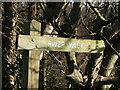 NX0982 : River Walk by Billy McCrorie