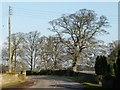 SE4806 : Winter tree alongside Bilham Lane by Christine Johnstone