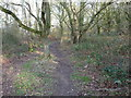 SJ4620 : Path in Merrington Green nature reserve by Jeremy Bolwell