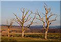 NS9693 : Field boundary near Gartgreenie by William Starkey