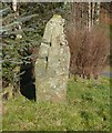 NN9851 : Cross slab near Westhaugh of Tulliemet by Russel Wills