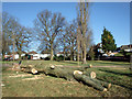 TQ3095 : Poplars Down, Oakwood Park, London N14 by Christine Matthews