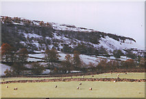 SD9771 : Sheep down by the Wharfe by Stephen Craven