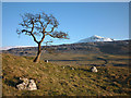 SD7276 : Winter hawthorn, Chapel-le-Dale by Karl and Ali