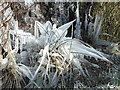 NH4999 : Ice sculptures by the A837 by sylvia duckworth