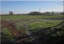 ST0307 : Pasture, Stoneyford by Derek Harper