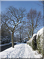 SE7871 : Castle Howard Road, a winter view by Pauline E