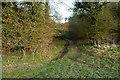 SU8395 : Little Cookshall Wood by Graham Horn