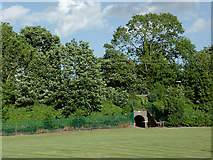 SJ9214 : Trees by the railway at Penkridge, Staffordshire by Roger  Kidd