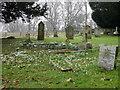 SU1219 : Snowdrops in the churchyard, Whitsbury by Maigheach-gheal