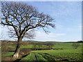 SE4109 : Farmland near Grimethorpe. by steven ruffles