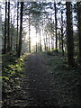 SN6971 : Forest path in Coed Tynybedw by Rudi Winter