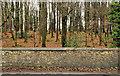 J2558 : Forest wall, Hillsborough (4) by Albert Bridge