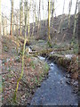 SE2804 : Lindley Dike, Lindley Wood by Samantha Waddington