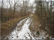 SU3942 : Foresters track - Hartway Copse by Sandy B