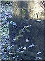 ST7270 : Lurking in the foliage by Neil Owen