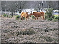 SU2309 : New Forest ponies at Bratley View by Maigheach-gheal
