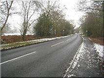 SU7953 : Hitches Lane by Jack Reid's Copse by Sandy B