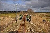 SY2591 : East Devon : Tram Track by Lewis Clarke