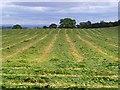 NZ0513 : Farmland, Brignall by Andrew Smith