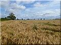 NZ2112 : Farmland, Manfield by Andrew Smith