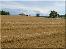 NZ2114 : Farmland, Cliffe by Andrew Smith