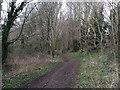SU1488 : Penhill Copse by Vieve Forward