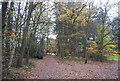 TQ2834 : Footpath, Tilgate Forest by N Chadwick