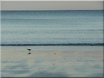 TA1281 : Recently uncovered beach, Filey by Humphrey Bolton