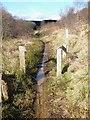 NY6691 : Osprey Trail, Kielder Forest by Oliver Dixon