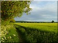 SP7300 : Farmland, Aston Rowant by Andrew Smith