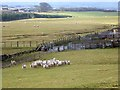 NZ0175 : Sheep and livestock pens at Mootlaw by Oliver Dixon