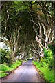 D0333 : The Dark Hedges, near Armoy by Yvonne Wakefield