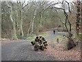 NZ3074 : Woodland path in Holywell Dene by Oliver Dixon