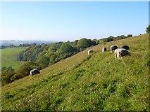 SU6022 : Downland, Exton by Andrew Smith
