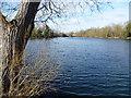 TQ5473 : Brookland Lakes by Marathon