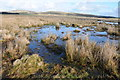 SX1278 : Boggy ground on Casehill Downs by Philip Halling