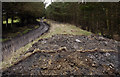 NZ0624 : Estate/farm road with elongated bank of mine spoil by Trevor Littlewood