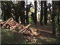 SU7134 : Logpile at Upper Farringdon by Colin Smith
