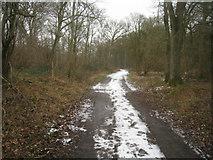 SU3942 : Test Way near Adders Corner by Sandy B