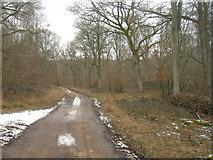 SU3942 : Track into Hartway Copse by Sandy B