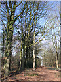 SP0307 : Stand Plantation, North Cerney Downs by Vieve Forward