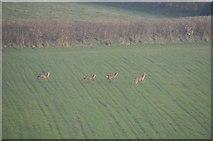 ST0215 : Mid Devon : Deer Running through a Field by Lewis Clarke