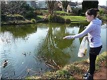 SS9712 : Tiverton : Feeding Ducks on Grand Western Canal by Lewis Clarke