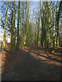 SU6253 : The Spinney in spring by Sandy B